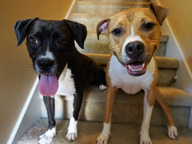 Dog Daycare - Naples Florida