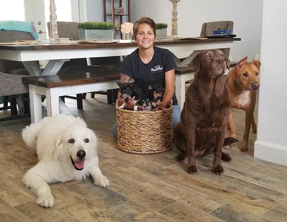 Dog-Daycare-Naples-Florida