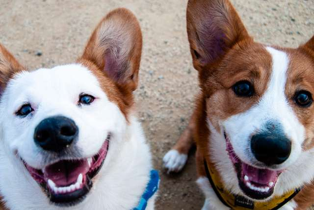 dog-boarding-and-daycare-naples-florida