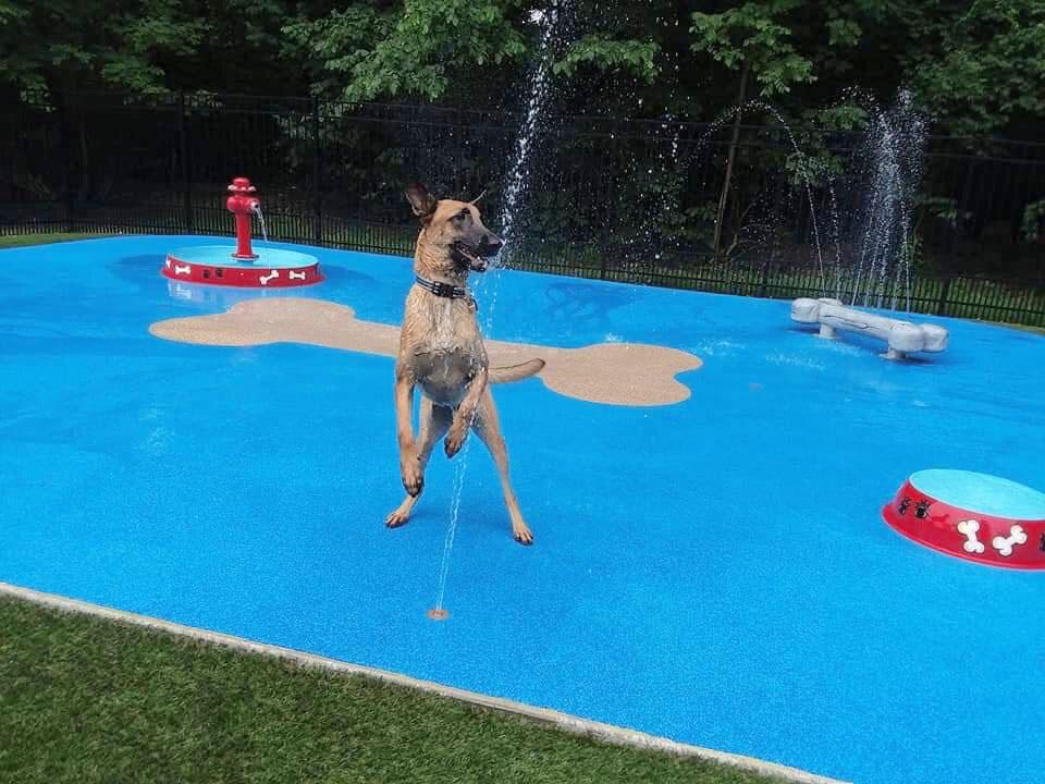 Splash Pad at Pampered Pet Resorts - Naples, Fl