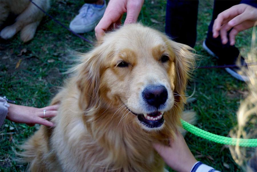 happy safe dog