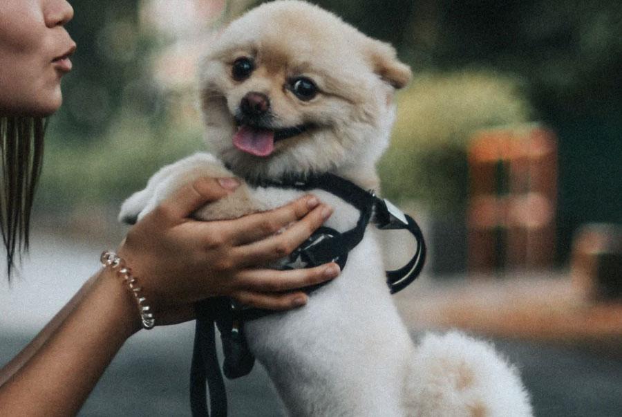 safe dog on leash