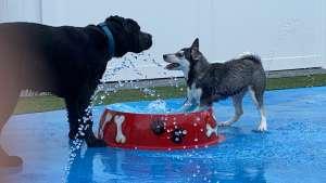 pups playing at the water bowl
